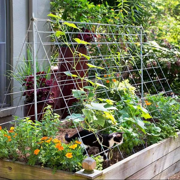 Cucumber Trellis Keep Cucumber And Zucchini Vines Off The