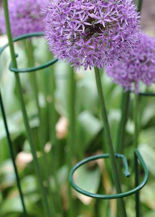 Stable Gathering Rings For Tall Flowers Amp Single Stem